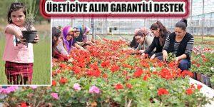Muğlalı Çiftçiye Alım Garantili 'Süs Bitkisi' Desteği
