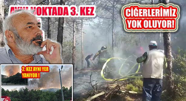 Ormanlarımız Yangın ve Maden Gerekçesiyle Yok Oluyor